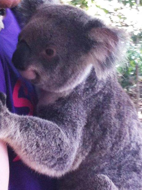 Ed Sheeran and Koala