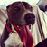 Image 1: Joel Peats dog