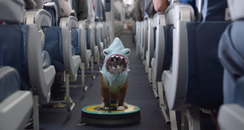 Shark cat on a roomba airline safety video
