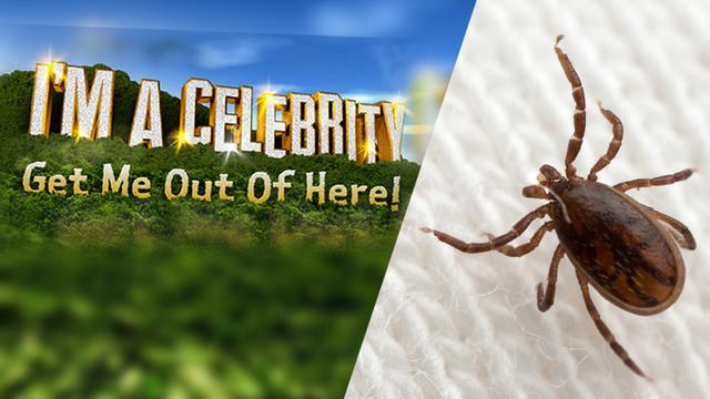 Im a celebrity spider eating video